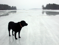 Mollie on the lake