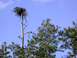 Island nest