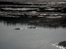 Lake Vermilion thaw