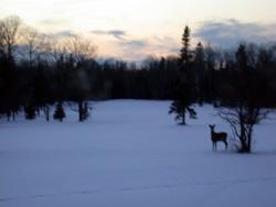 January deer